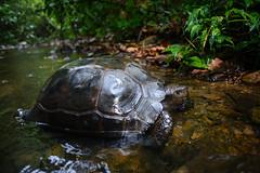 #My favourite wildlife shots