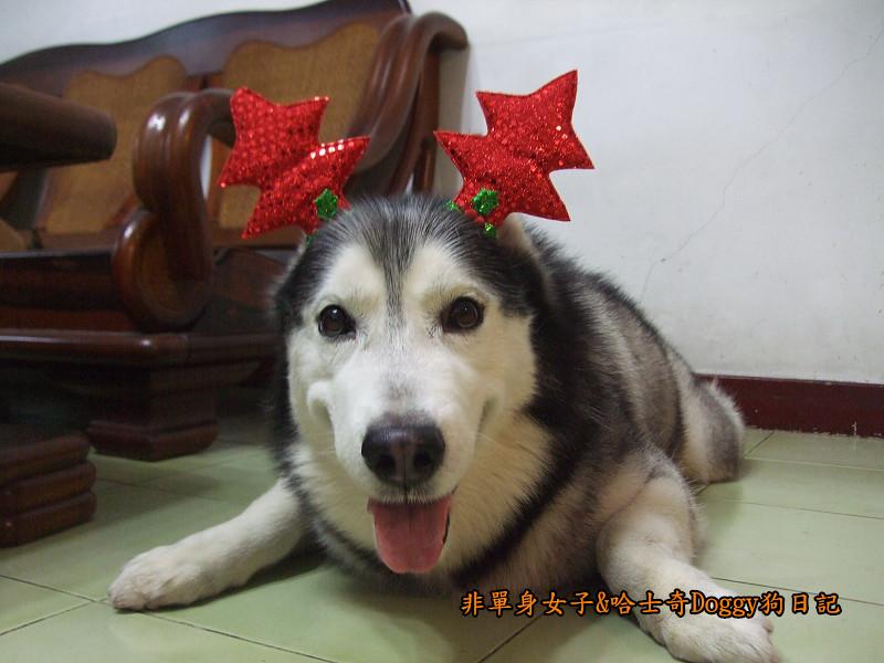 Doggy聖誕節紅色聖誕樹髮箍裝扮14