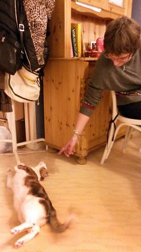 bjorns_sverigexmas-cocotesscats4