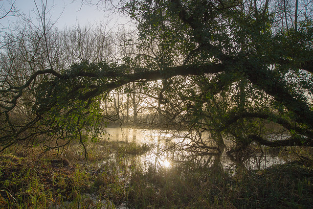 The Frome, early morning