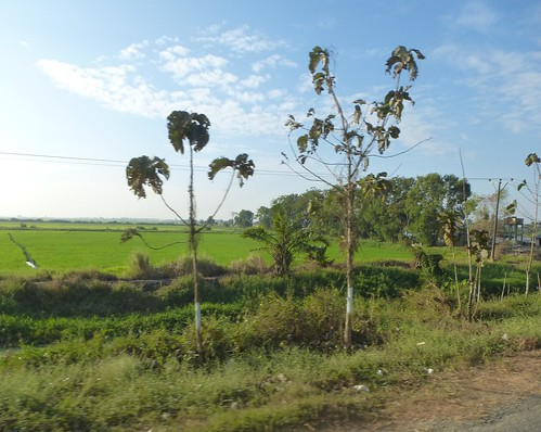 M 16-Yangon-Pathein-bus (37)