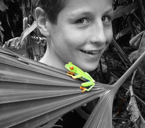 costarica frog