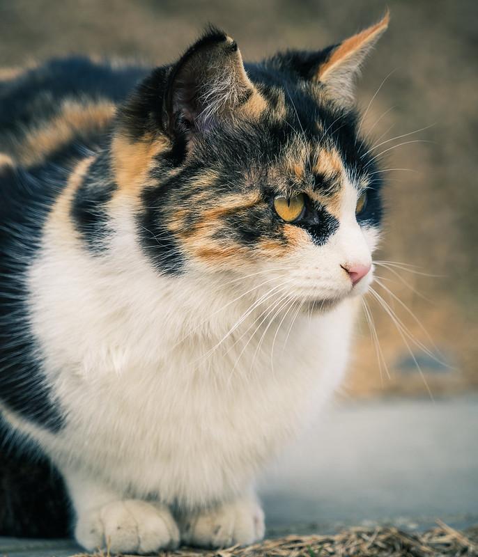 20160217_03_野良猫