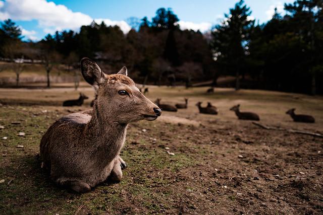 In The Nara Park