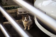 Today's Cat@2016-03-21