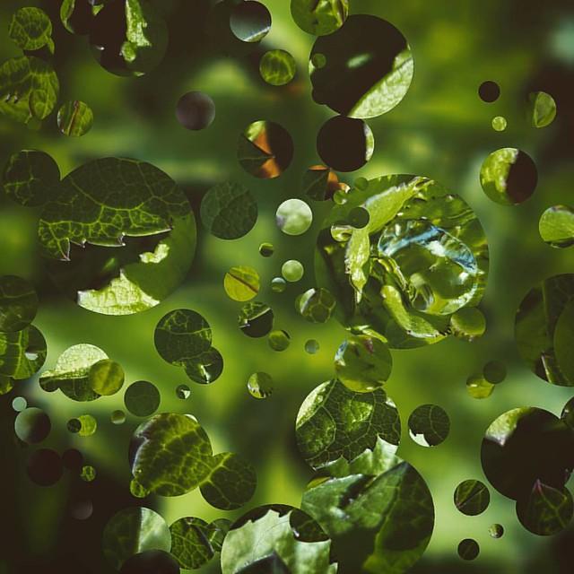 Leaf Rain Drops