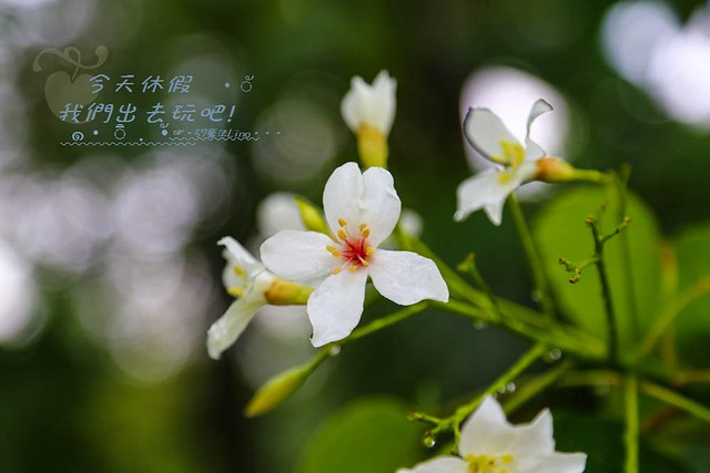 IMG_3653-1