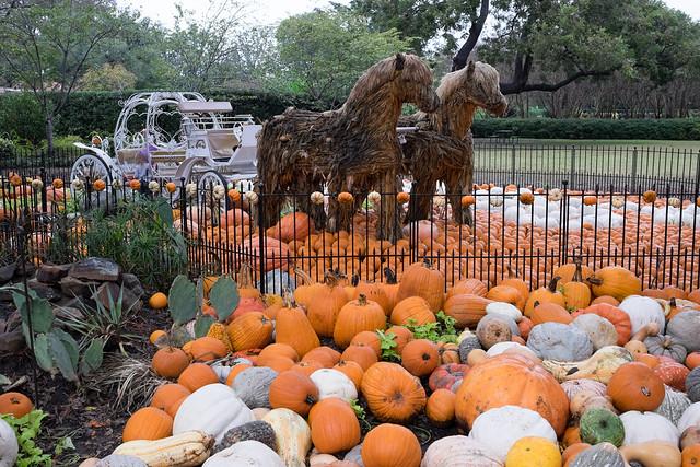 Pumpkin Village Dallas Arboretum