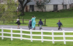 Amish Children Going Visiting