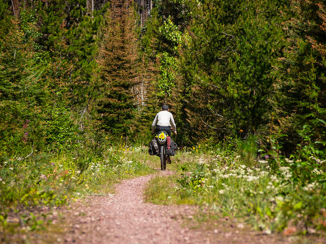 Riding in the Flathead National Forest