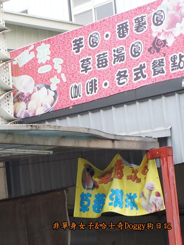 苗栗草莓大湖酒莊清安洗水坑豆腐街12