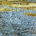 (DSCF3891) - 31-08-2013 by Neil Johansson LRPS