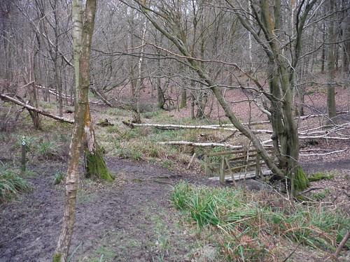 Spittal Brook Crossing, Cowheath Wood