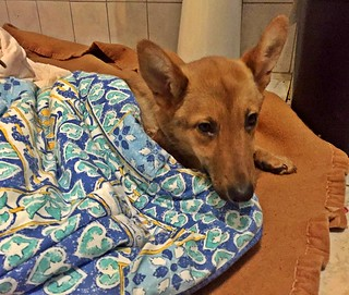 Aisha dopo l'operazione