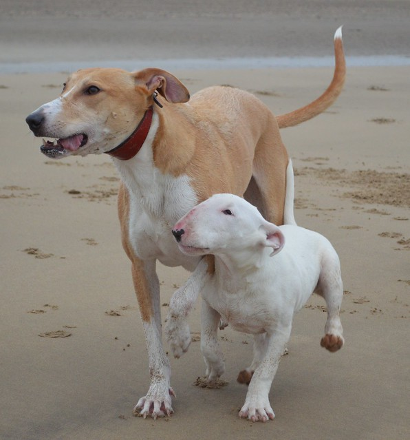 Dogs on Crimdon Beach