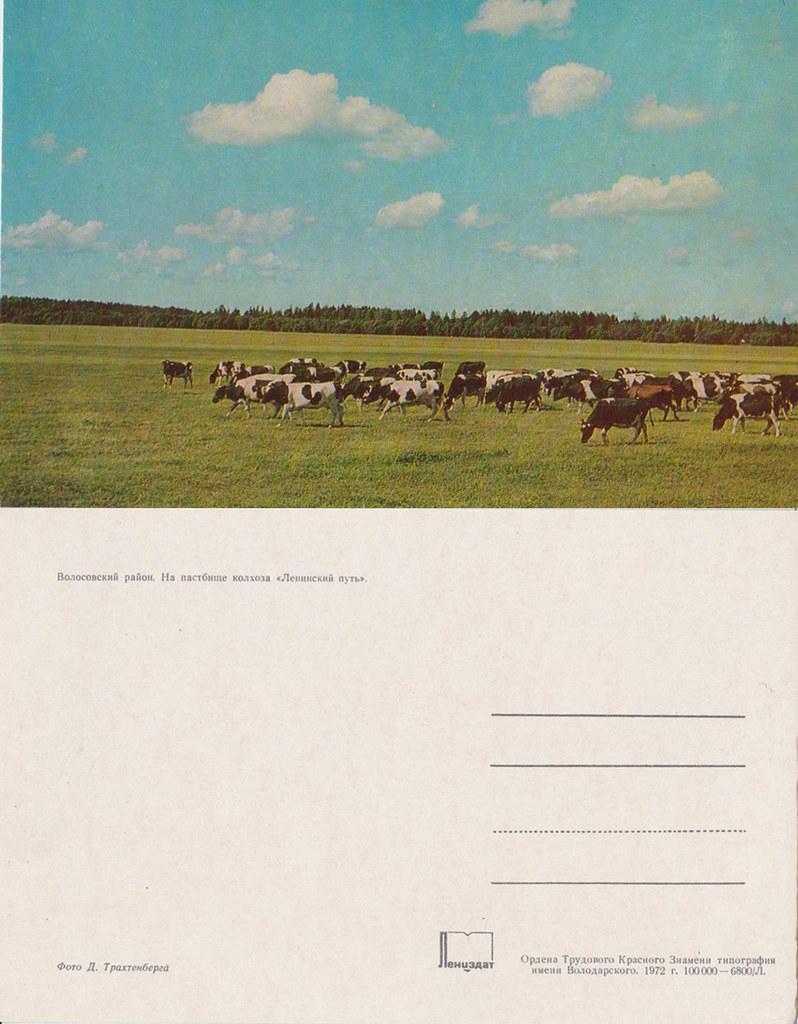 1979《列宁格勒州各地》明信片15