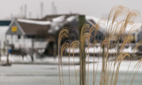 image_brewer_yacht_yards_pilots_point_marina