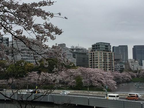 サニーデイ・サービス「東京」ジャケ写撮影ポイントを探して