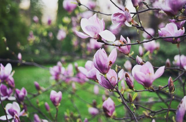 Magnolia - The Hearabouts