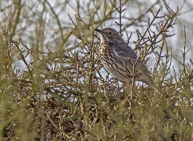 Bird 19_7D2_140316