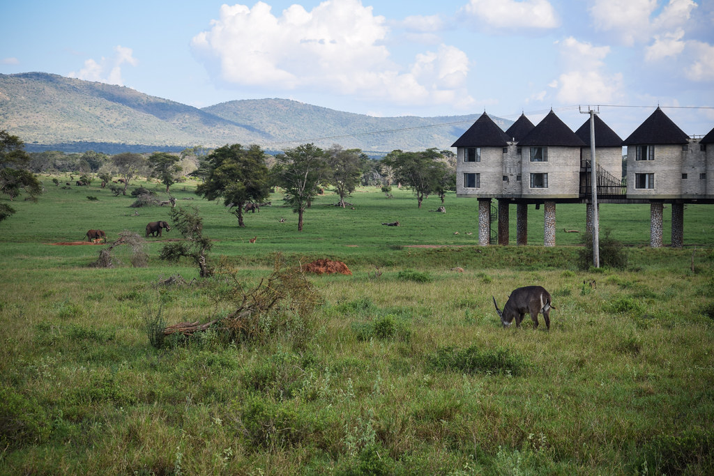 Safari, Sarova Salt Lick Game Lodge