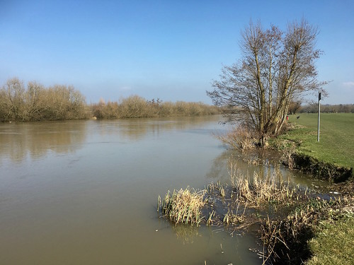 The Thames near Reading