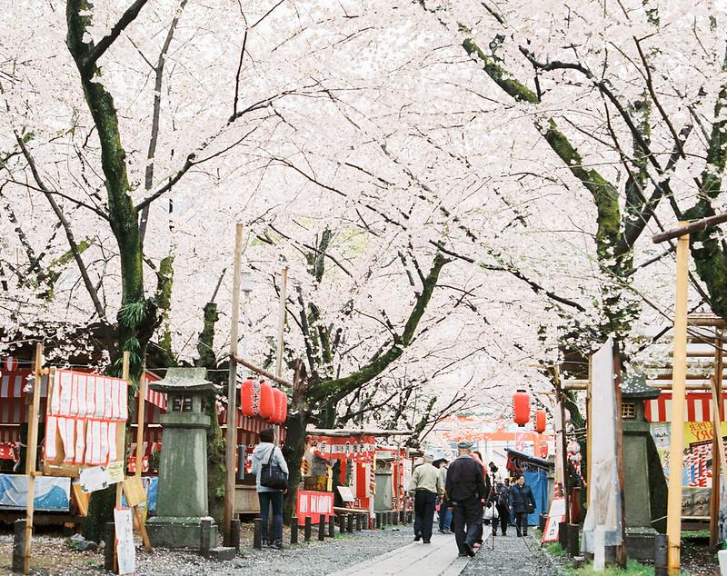 160330-0407 關西:平野神社