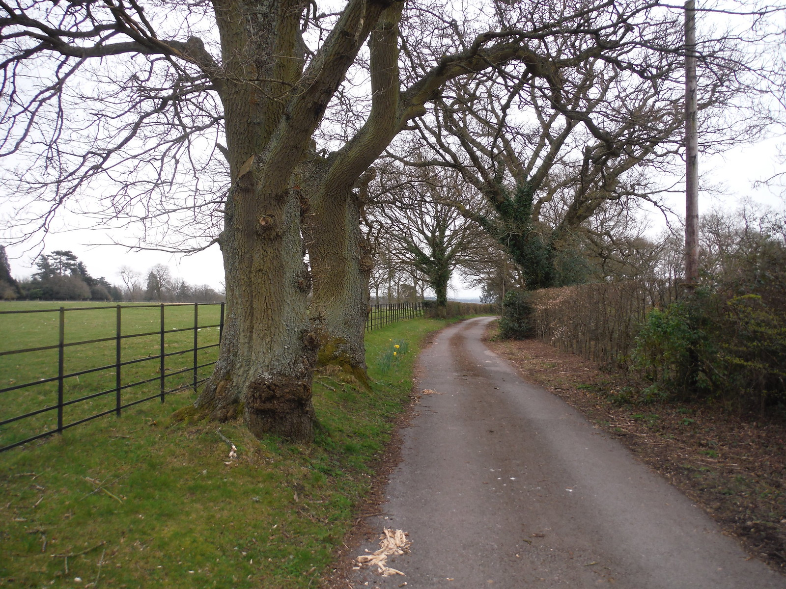 Driveway to Wooten's SWC Walk 260 Aldermaston to Woolhampton [Midgham Station] (via Frilsham)