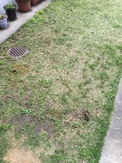 草ぬき、肥料やり。4月14日