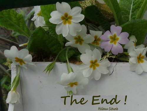 Ombres et lumières & fleurs du jardin