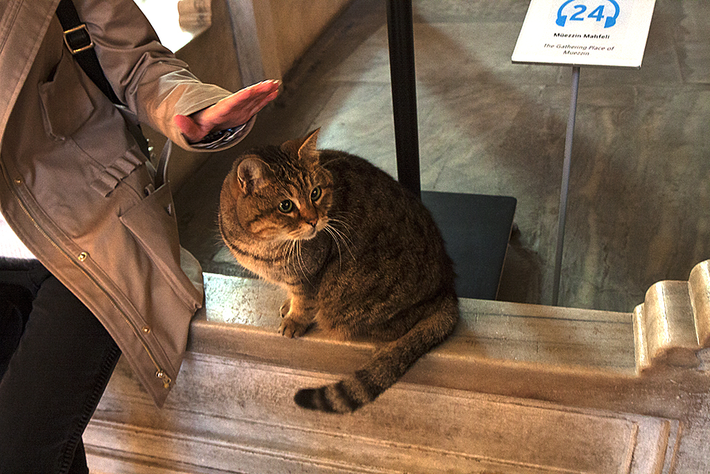 Stray cat in Hagia Sophia--Istanbul