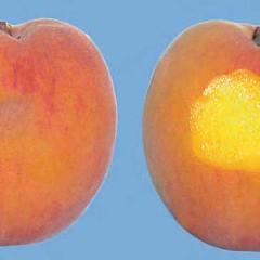 peaches-0092