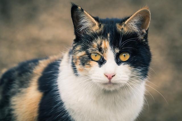 20160217_05_野良猫