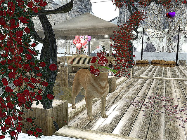 Valentine's On Ice 2016  - Like A Canine Fidelius Forever Faithful  In Love