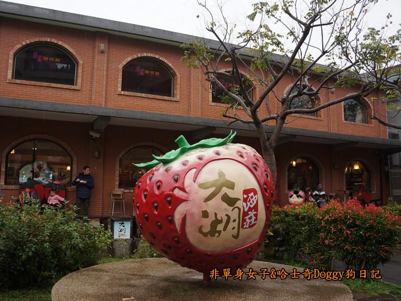 苗栗草莓大湖酒莊清安洗水坑豆腐街05
