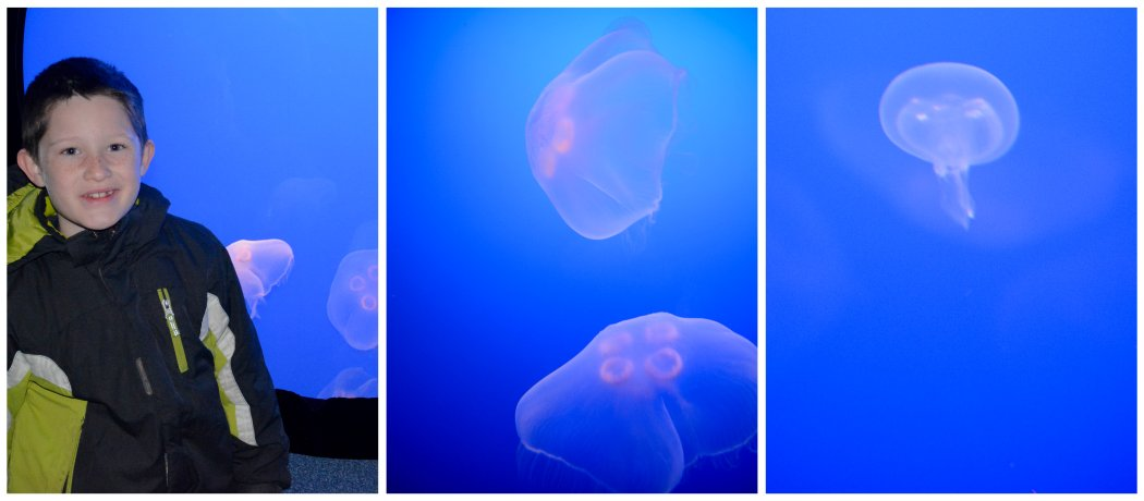 ben and the jellies