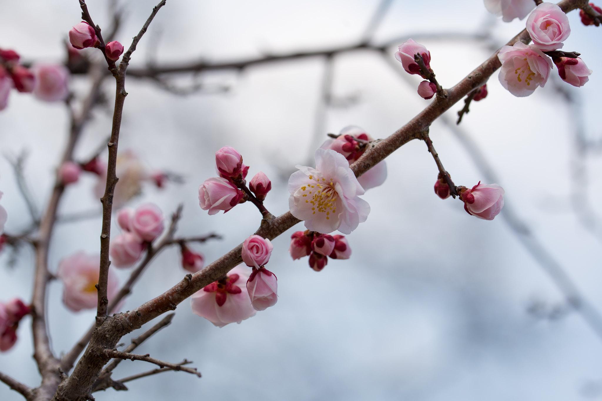2016-02-28 武蔵野公園 001-7