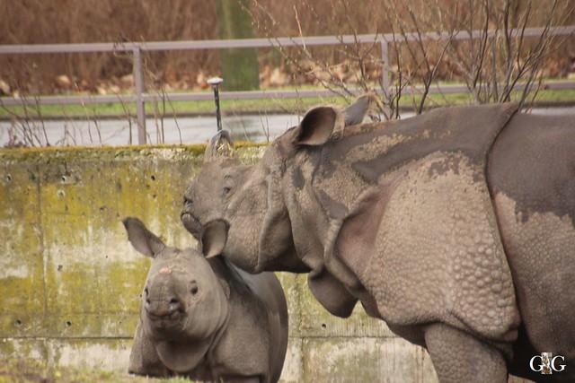 Nieselregen im Tierpark Friedrichsfelde 25.03.2016124