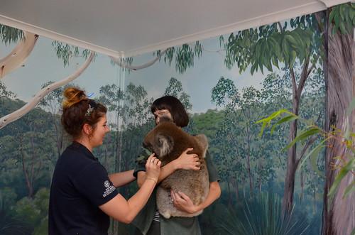 Iris with a Koala