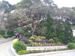 CIRCLEG 大澳 巴士 船 一天遊 香港 東涌站 炭燒雞蛋仔 貓 少林寺 夜景 散步 遊記 (21)