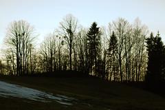 Dernière neige
