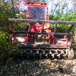 Geoboy clearing the wetland