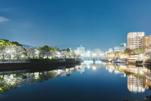 Sakura Night.