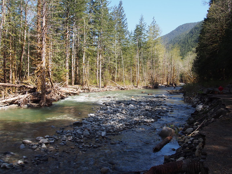 North Fork Skykomish River: New Channel: The river completely destroyed the road here and took over its right of way!