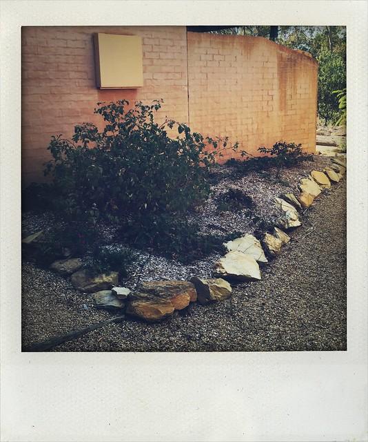 Veg garden April 16