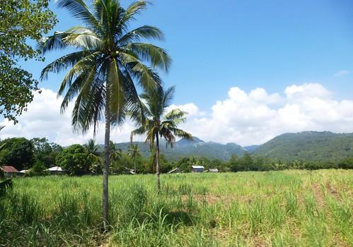 P16-Negros-San Carlos-Dumaguete-Route (30)