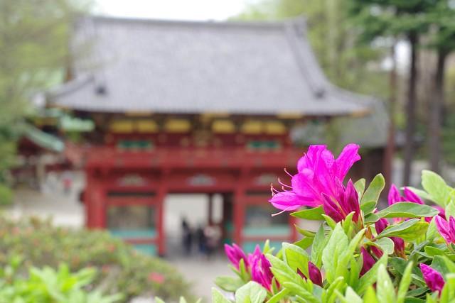 2016/04/09根津神社つつじ祭り-4
