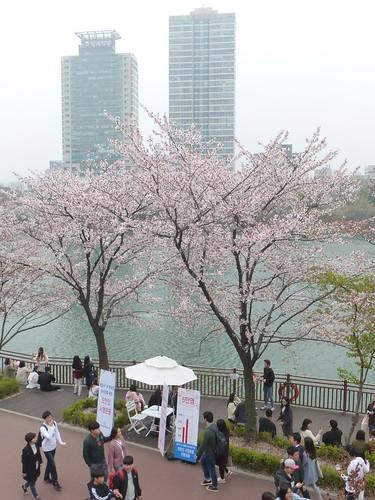 C16-Seoul-Parc Seokcho(8)