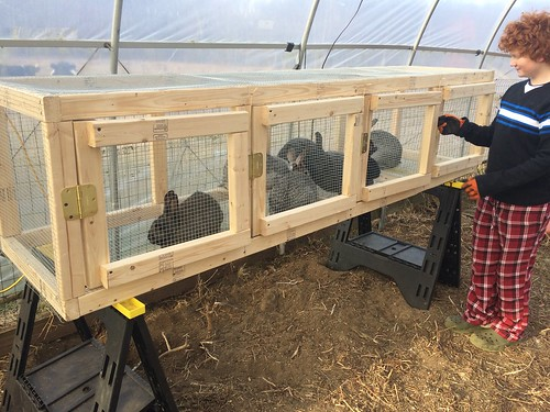 Rabbit Hutches 005