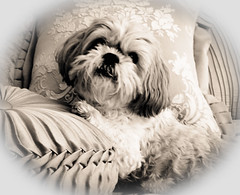 11/366 Mr. Fuzzy Face Puppy BW
